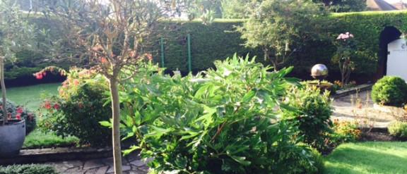 clinic gardens
